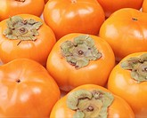 Persimmon