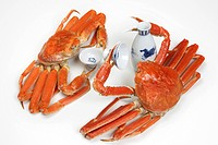 Crab (thumbnail)