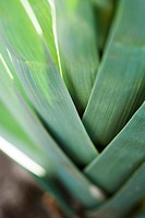 Leeks, extreme close_up