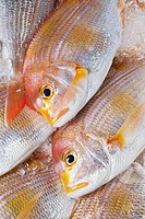 Red sea bream (thumbnail)