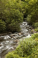 Rocky flowing creek with green trees in Maui, Hawaii