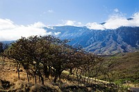 Landscape of Maui, Hawaii with trees in foreground and mountains in background covered in clouds