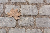 Close_Up, Dead Plant, Day, Cobblestone, Autumn