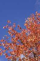 Blue, Branch, Clear Sky, Day, High Section