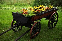 Blooms, Blossom, Bushes, Cart, Colorful