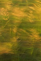 Blurred, Green, Yellow, Appearance, Close_Up