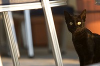 Black, Cat, Close_Up, Domestic Cat, Feline