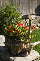 Basket, Cart, Close-Up, Flora, Flower (thumbnail)