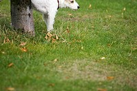 Dog, Dog Collar, Domestic Animals, Garden, Grass