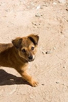 Brown, Day, Dog, Domestic Animals