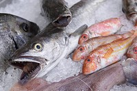 Close_Up, Dead Animal, Fish, Fish Market, Food