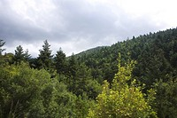 Cloud, Day, Dense, Forest, Generic Location (thumbnail)