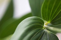 Close-Up, Extreme Close-Up, Focus On Foreground, Fresh, Green (thumbnail)