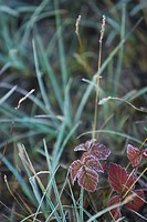 Blade, Blade Of Grass, Close_Up, Day, Full Frame