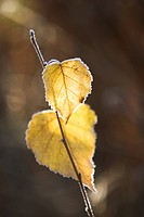 Close_Up, Day, Dry, Leaf, Leaf Vein