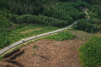Road, way, highway, country, countryside, forest (thumbnail)