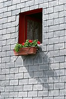 Blooms, Blossoms, Brick, Brickwall, Building Exterior