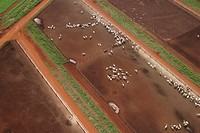 Agriculture, animals, aerial view (thumbnail)