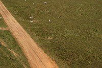 agriculture, animals, aerial view