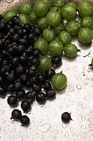 Blackcurrant, Crop, Cultivated, Drupes, Edible