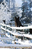 Day, Fence, Horse, Mammal (thumbnail)