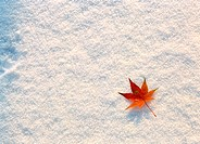leaves, background, snow, scenery, nature, film