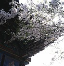 season, landscape, korean architecture, temple, scene, spring, nature