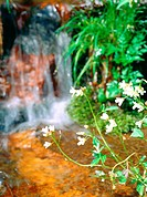scenery, plant, valley, waterfall, flower, landscape, nature