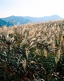 fall, reed, season, scenery, nature, autumn, plant