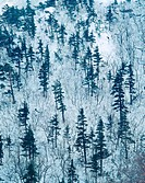 mountain, nature, tree, snow, scenery, forest, winter