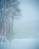 Scene, nature, tree, snow, scenery, view, winter (thumbnail)