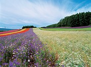 flowers, field, flower, plants, plant, landscape