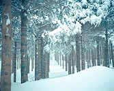 mountain, scenery, snow, winter, tree, cold, nature