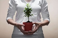 Woman holding houseplant close_up, midsection