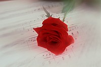 Red Rose On Sheet Music (thumbnail)