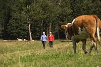 Austria, Karwendel, Senior couple nordic walking