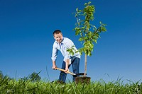 Young man planting a small tree