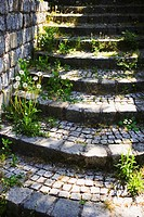 Stone steps overgrown with grass and dandelion