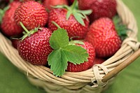 Freshly picked ripe strawberries in a wicker basket