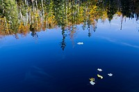 Germany, Bavarian Forest, Trees reflecting on water surface