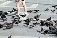 Italy, Venice, Markusplatz, A person and lots of pigeons