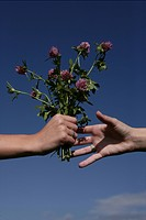 hands, give, flowers, friendship, blue sky, hand