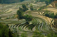 the magnificent ´tiger mouth´ rice terraces of Yuanyang in Yunnan China