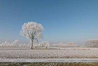 Snow_covered tree in winter landscape