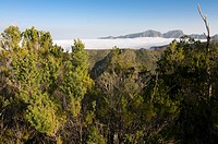 The Unseco world heritage sight Garajonay La Gomera Canary Islands Spain