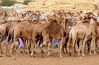 Western Africa Mauritania Africa