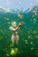 Woman in Jellyfish Lake, Mastigias papua etpisonii, Jellyfish Lake, Micronesia, Palau