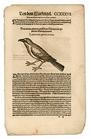 zoology / animals, textbooks, Historia animalium, by Conrad Gessner, Zurich, Switzerland, 1551 _ 1558, shrike Lanius, woodcut, historic, historical, 1...
