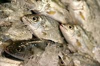 fresh, seafood