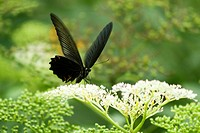 Butterfly on flower, close_up
